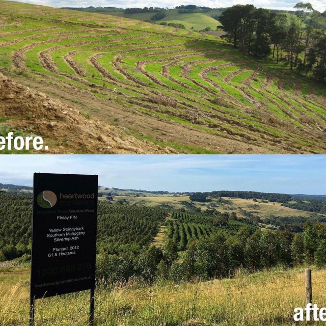 Radial Timber purchases old farmland in the Gippsland region tohellip